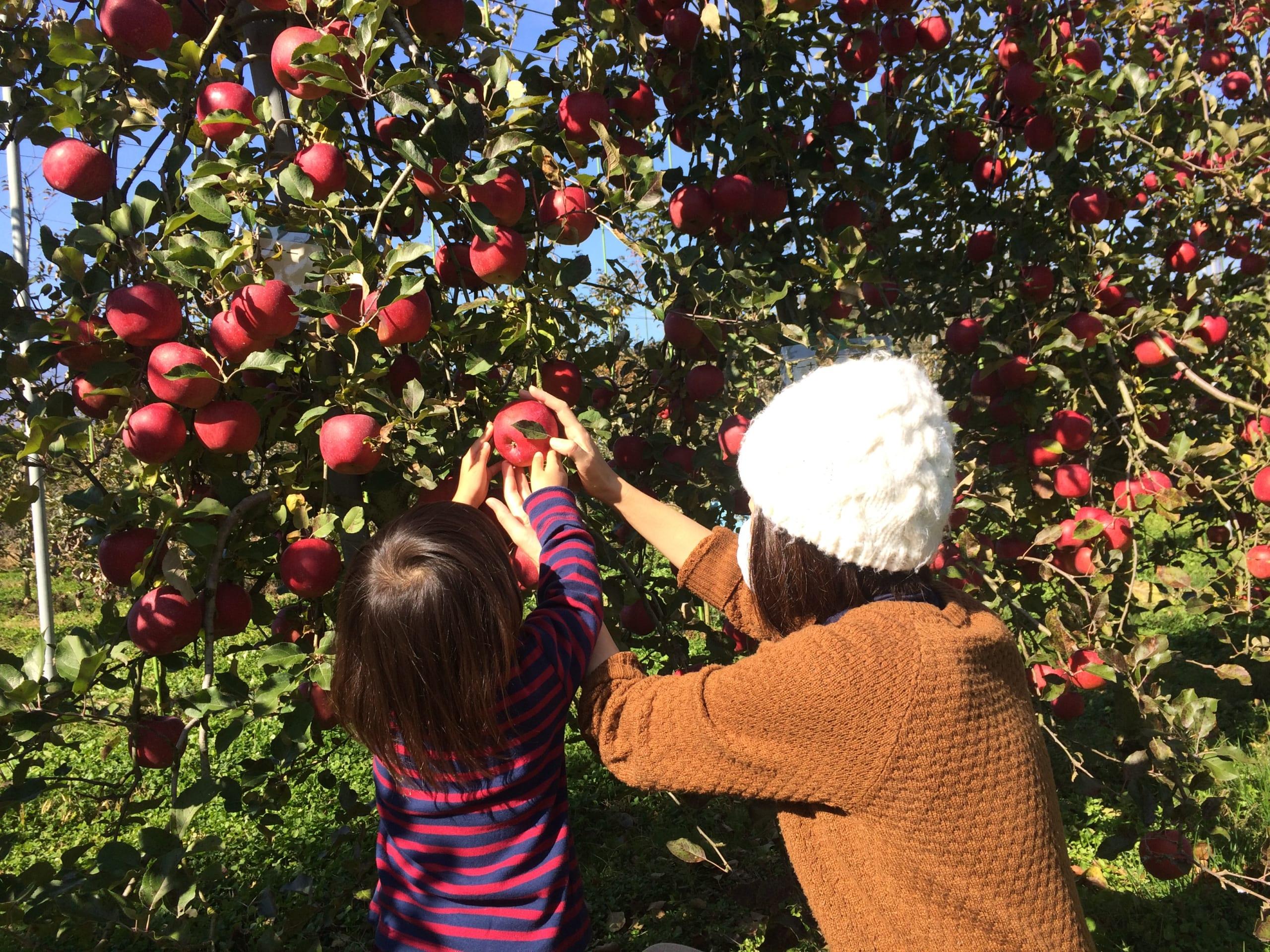 オーナー制度-りんご