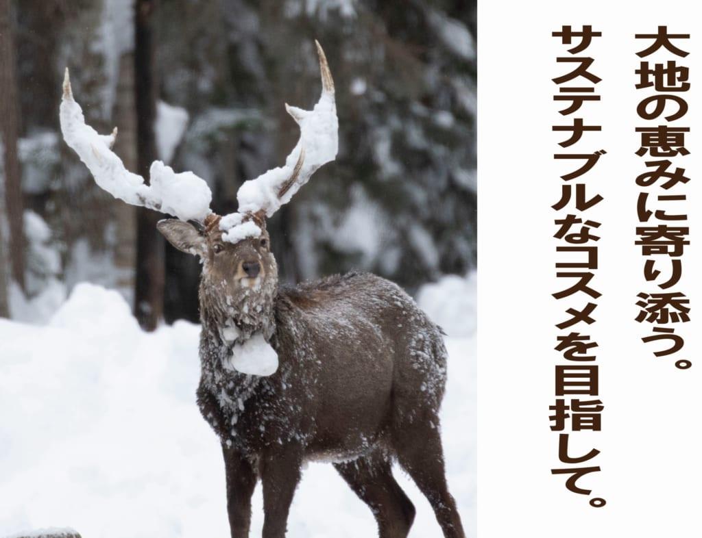 YUKエゾ鹿イメージ