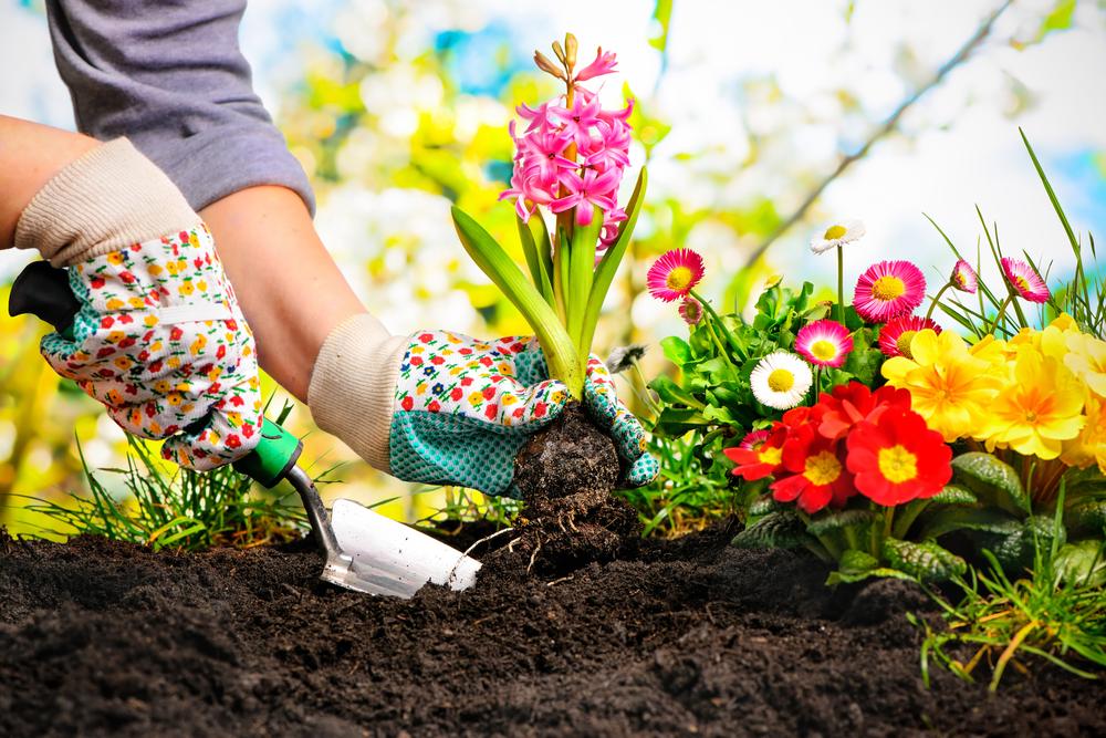 花を育てる